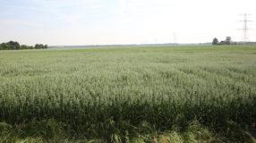 gluten glutenvrij haver holland nederland bodem